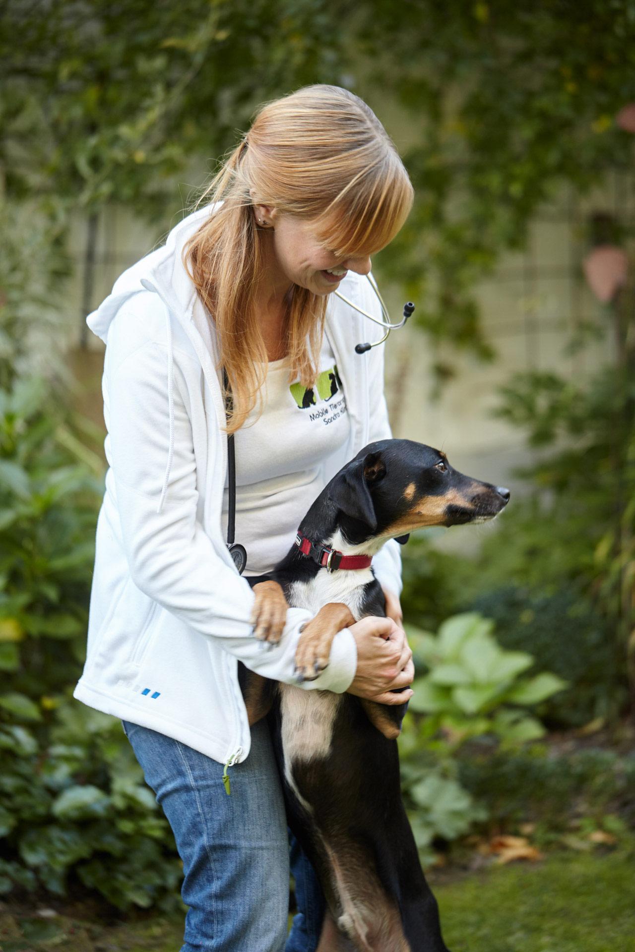 Angst-Hunde und Verhaltensstörung